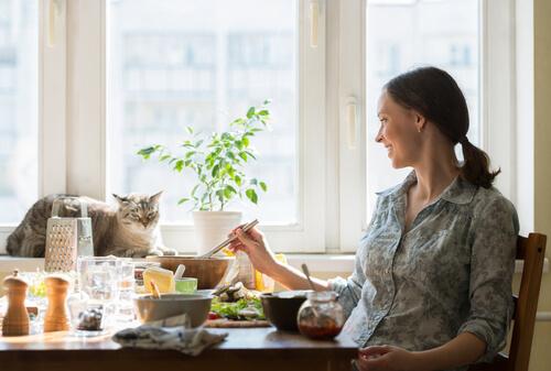 Las mejores recetas de comida para gatos exigentes