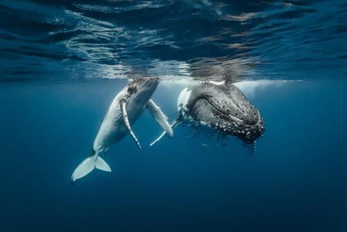 Santuario de ballenas en Baleares