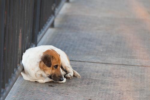 ¿Qué hacer si se ha perdido tu mascota?