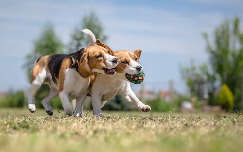 Socializar a un perro