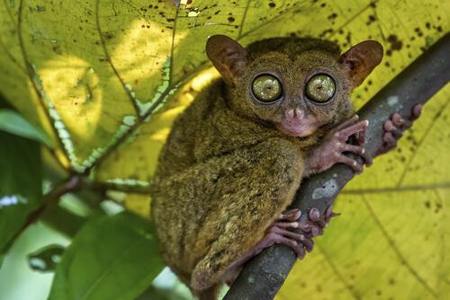 Los 5 animales más curiosos del mundo
