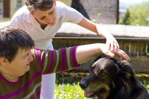 Важность собаки в обществе
