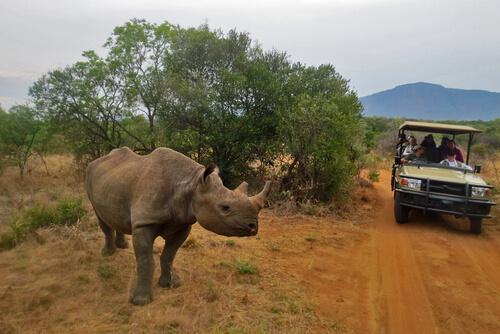 Tips para ir de safari