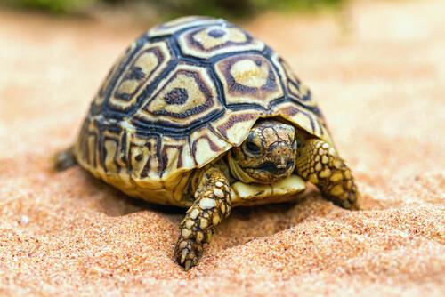 Tips para tener una tortuga de mascota