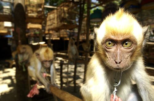 España, la puerta al tráfico ilegal de animales en Europa