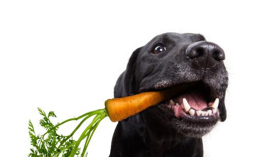 Verduras que pueden y no pueden comer los perros
