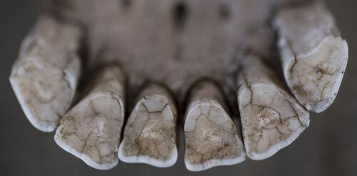 Un veterinario de caballos de hace 3 000 años