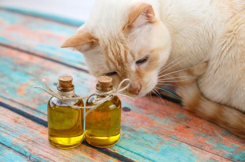 Aceite de oliva para los gatos