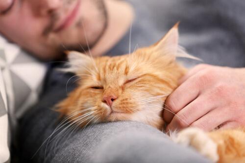 Acostarse con gatos