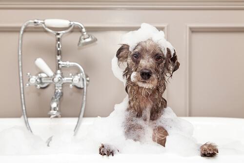 Cómo bañar a un perro en invierno