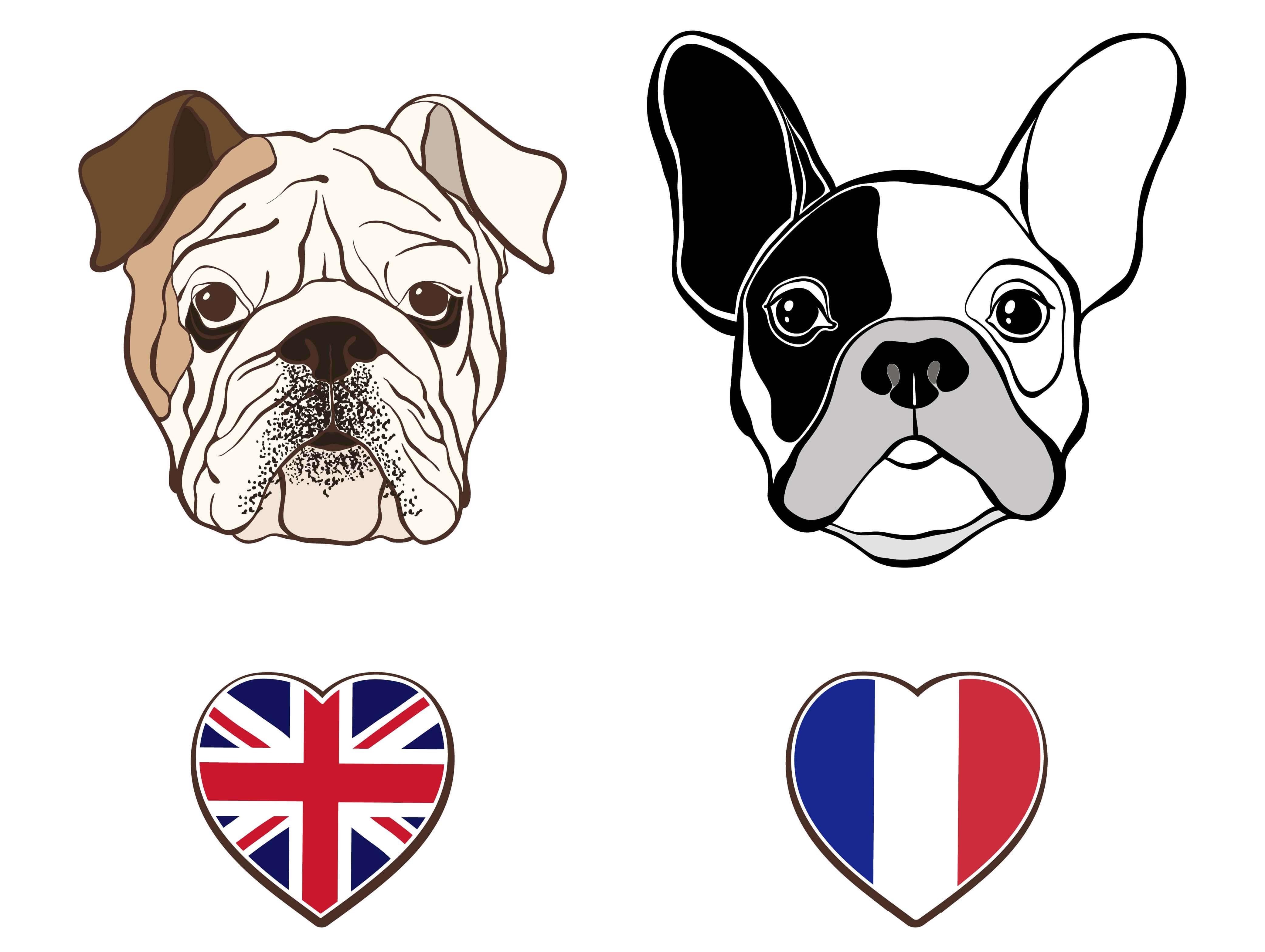 Bulldog inglés y francés: diferencias