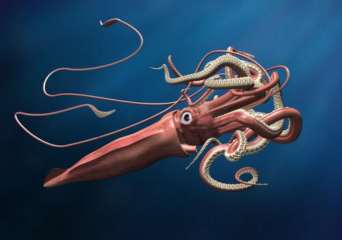 Calamar colosal o Mesonychoteuthis hamiltoni