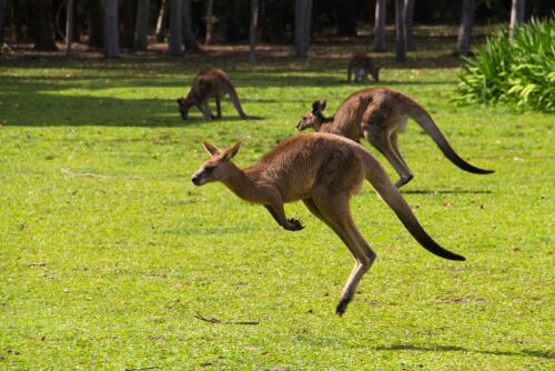 Los increíbles animales de Australia