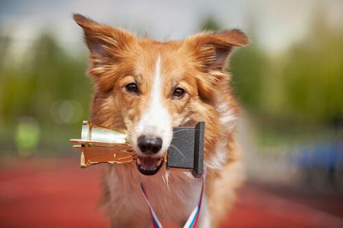 Las claves para enseñarle cualquier truco a tu perro