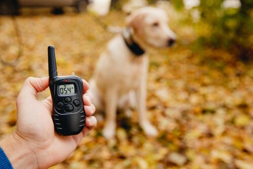 Collares eléctricos para perros