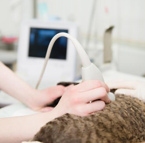Cómo detectar si tu gata está embarazada