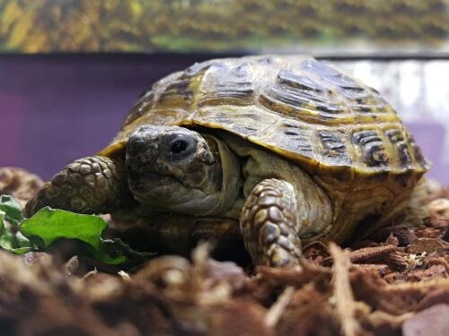 Fabrica un terrario para tu tortuga