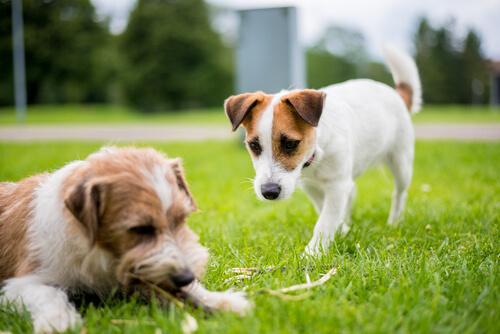 Cómo tratar un perro celoso
