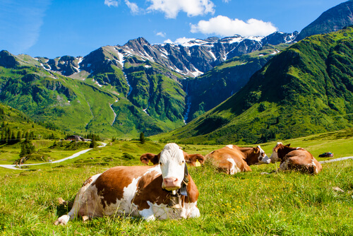 Contaminación de la ganadería intensiva