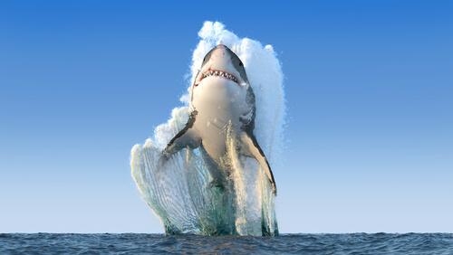 ¿Cuándo ataca un tiburón?