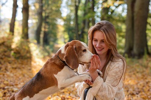 Cuánto tiempo puede recordar un perro a una persona