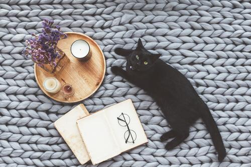 Cuentos sobre gatos
