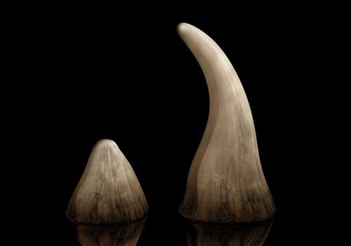 Cuerno de rinoceronte del mercado negro