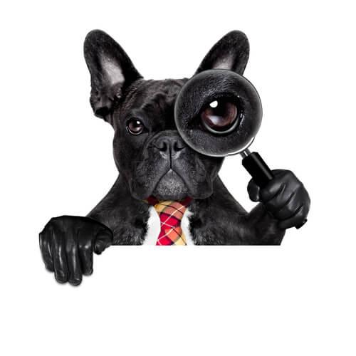 Curiosidades científicas sobre tu perro