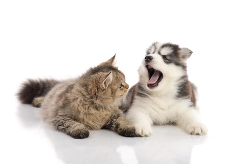 La caída de los dientes en gatos y perros
