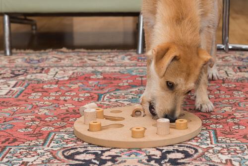 Experimentos con perros