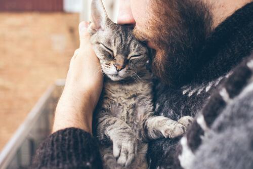 Gato se deja abrazar