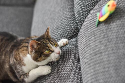 Juegos con tu gato