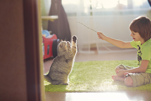 Tips para jugar con tu gato