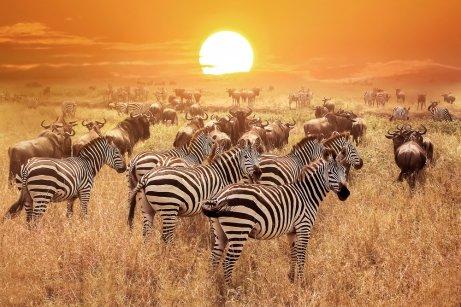 Fauna de la sabana africana.