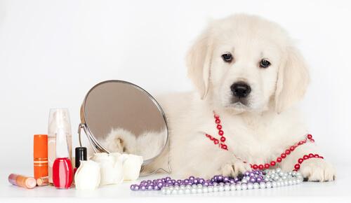 ¿Puedes maquillar a tu mascota?