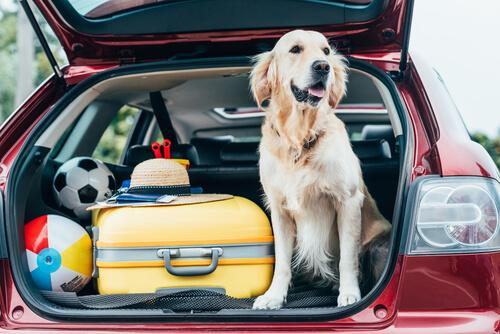 Consejos que tienes que tener en cuenta para ir con tu mascota de vacaciones