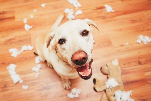 Memoria de los perros