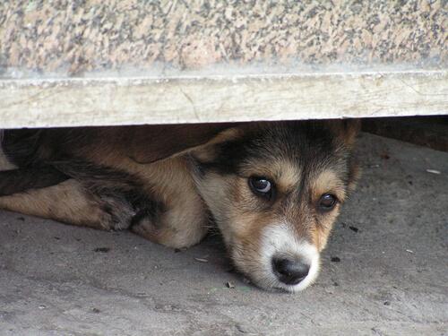 Cómo tratar el miedo a las tormentas en perros