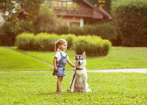 Orientación en los perros