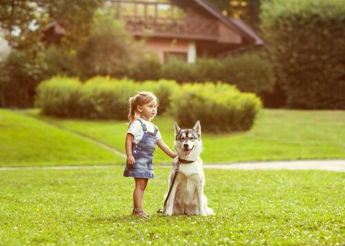 El sentido de la orientación en los perros