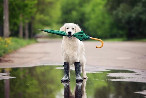 Pasos para enseñar a un perro