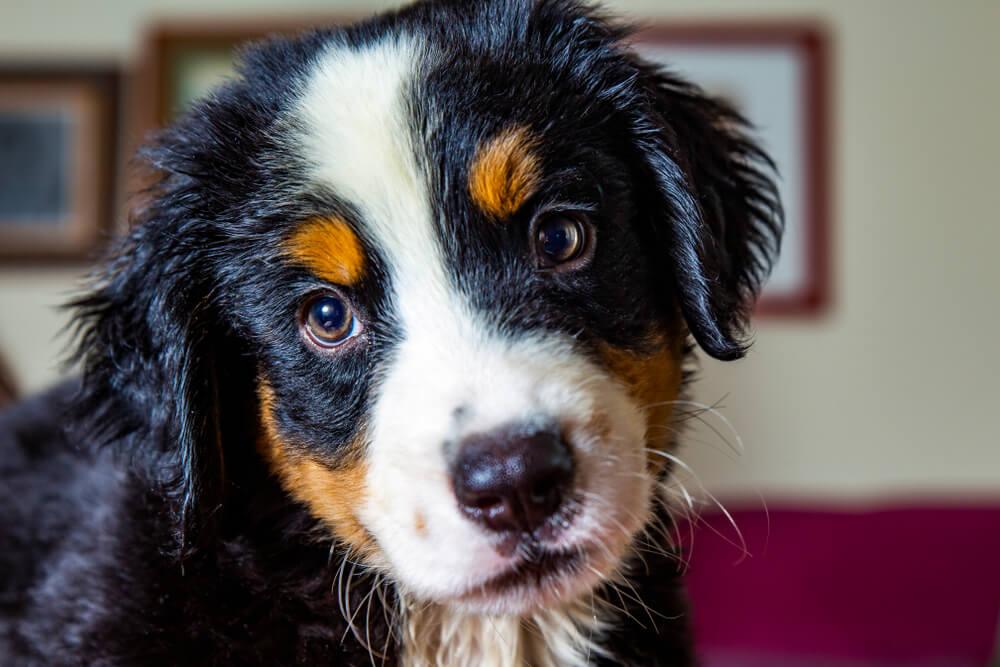 Испанские породы собак