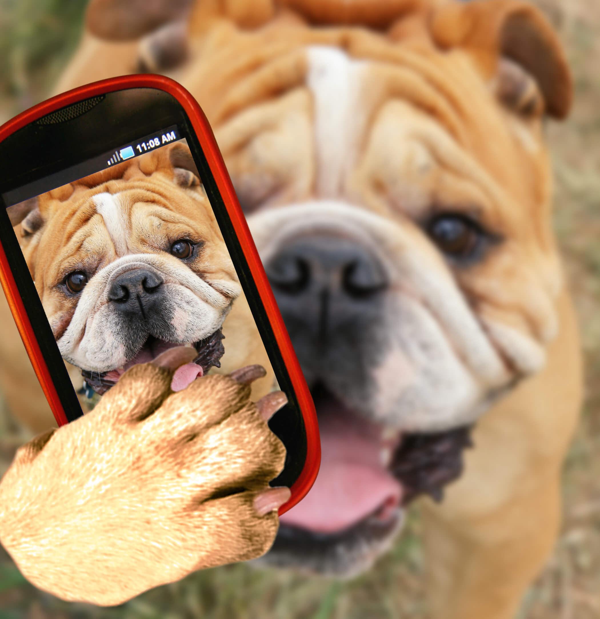 Perro se hace selfie
