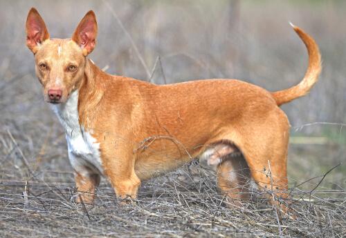 История собак поденко: сколько существует видов