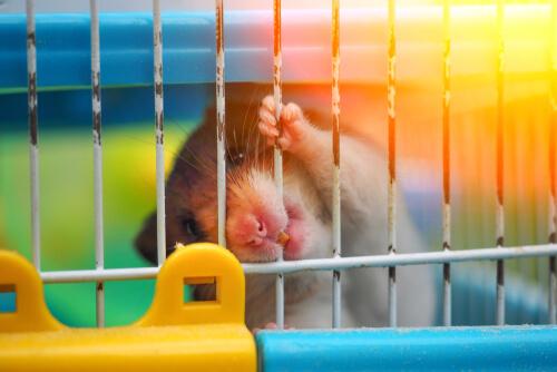 Resultado de imagen para hamster trata salir de la jaula