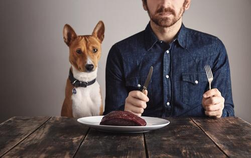 La importancia de las proteínas en perros