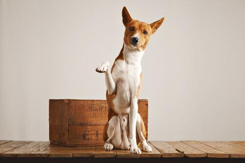 ¿Puede un perro hacer sus necesidades en una caja?