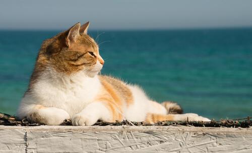 ¿Cómo refrescar a tu gato en verano?