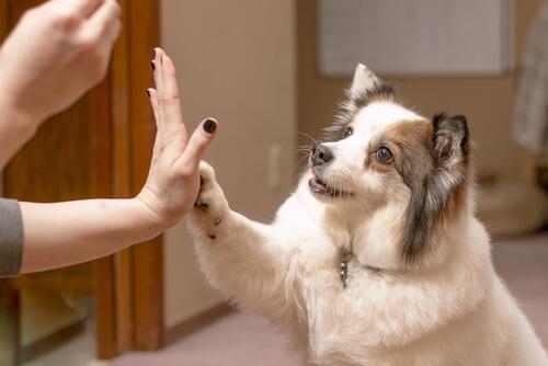 Refuerzo positivo con perros