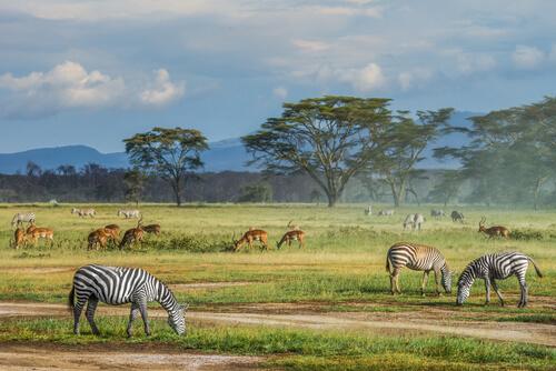 ¿Son igual de útiles todas las especies para conservar la biodiversidad?